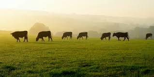 Sale Barns In Nebraska Broken Bow Livestock U0026 Brott Auction Service