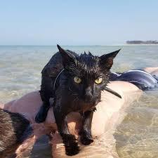 Cat Photo Album Sea Cat Album On Imgur