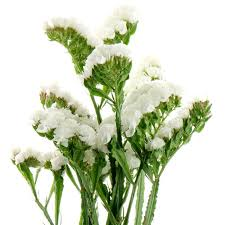 statice flowers white statice statice in bulk wholesaleflowers net
