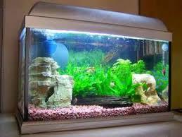 membuat filter aquarium kecil cara membuat filter aquarium sendiri arafuru