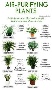 best bedroom plants best house plants for clean air and better health remedies