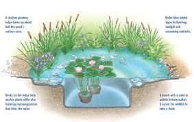 diy natural backyard pond diy mother earth news