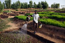 the impact of conflict and instability on agriculture in mali and