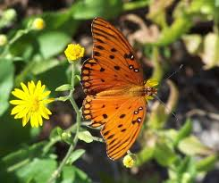 butterfly garden city of sumter sc