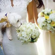 The 25 Best Gardenia Bridesmaid Bouquet Ideas On Pinterest
