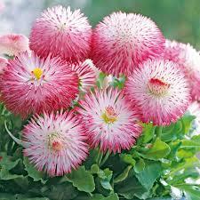 421 best flower power images on pinterest flowers garden flower