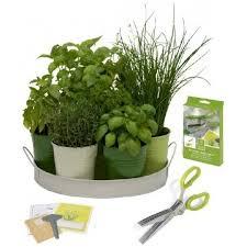 herbe cuisine acheter ciseaux herbes plateau 7 herbes aromatiques et aromates