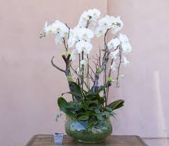 orchid arrangements orchid arrangement 21 in tarzana ca flowers and designs by