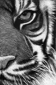 best 25 scratch art ideas on pinterest scratchboard make your scratchboard tigre by roman novikov on deviantart