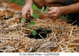 no dig vegetable gardening stock photo search pictures and photo