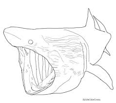 whale shark coloring 100 images 20 shark coloring