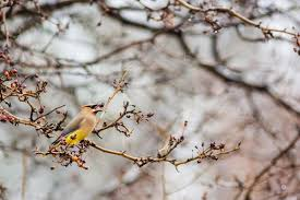 bird friendly native plants audubon plants for birds audubon texas
