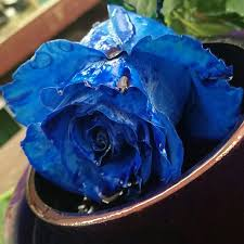 blue roses delivery flowers flower delivery today in boston autism
