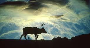 the magical reindeer nose geminiresearchnews com