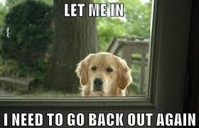 Dog Lady Meme - funny let me in dog meme meme dog and crazy cat lady