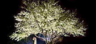 norfolk botanical gardens christmas lights 2017 norfolk botanical gardens wedding melanie and robert