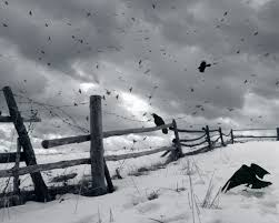 halloween raven background black and white 19 reasons why the crow should be your new favorite animal