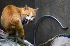 cat island japan s cat island a bad precedent or new form of tourism