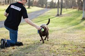 How To Train Dog To Stop Barking Syracuse Dog Training 315 437 Dogs