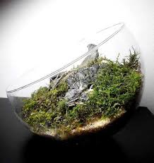 Aquascape Moss In Moss Bottle