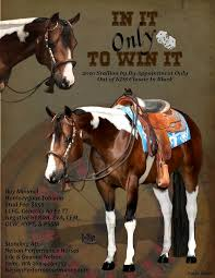 264 best horse show grooming images on pinterest horse stuff
