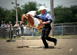 miniature horses jumping