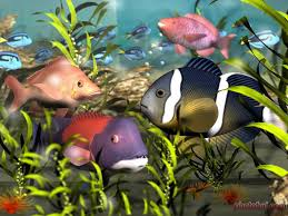 fish desktop pictures