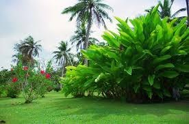 paisajes de jardines