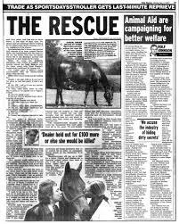 retired race horse