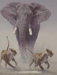 daniel smith wildlife art