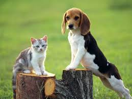 cat and dog background
