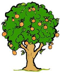 orange tree clip art