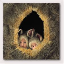 baby pictures by anne geddes