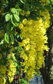 flowers clusters