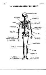 bones in the body