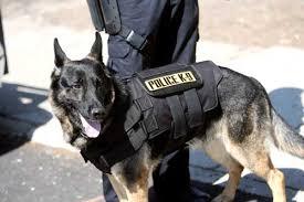 police dog vest