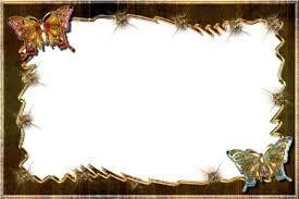 butterflies in frame