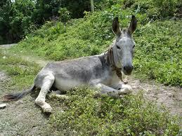 image donkey