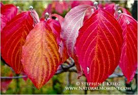 hardwood leaves