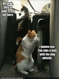 funny pictures of cats and dogs