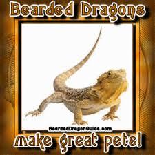 bearded dragons pets