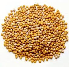 mustard seed image
