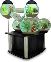 hamster in fish tank
