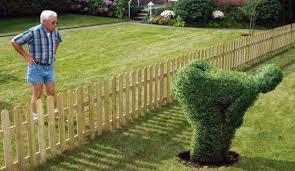 hedge bush