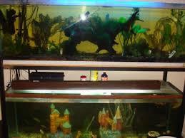 300 gal aquariums