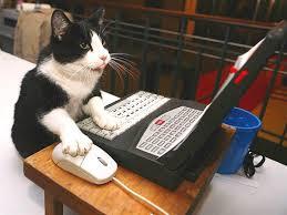 gatta al computer