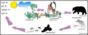 food chain picture