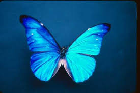 butterfly wings picture