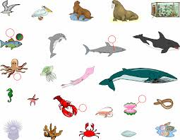 images of sea animals