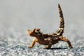 australian wildlife animals